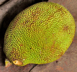 local market56: unopened jackfruit at local Cambodian general market