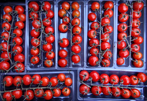cherry tomatoes1: trays of vine-ripened cherry tomatoes