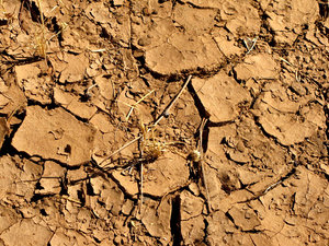 dry and cracked1: dried out waterholes and river's edge