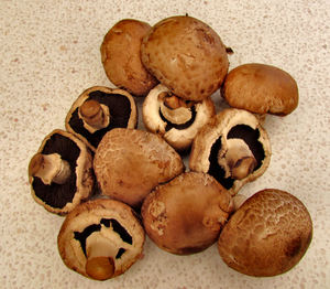 brown mushrooms1: quantity of tasty Swiss brown mushrooms