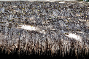 rough roof thatching: thatched hut roof - layers of thatching
