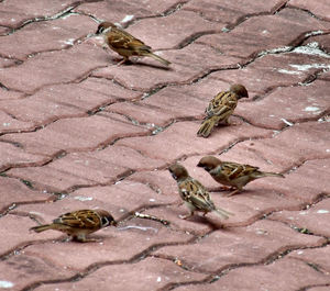 five sparrows1b4: birds of little worth
