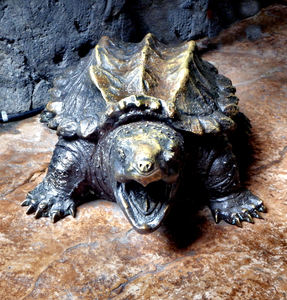 hard bite2: replica zoo creatures for display and tactile experience - alligator snapping turtle