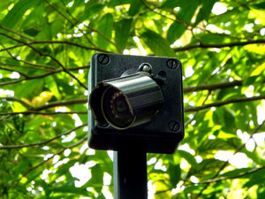 tree-high camera surveilance1: external closed circuit day & night 24/7 digital surveillance camera
