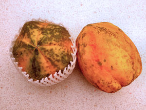 ripe pawpaw5: healthy and nutritious tropical ripe papaya fruit