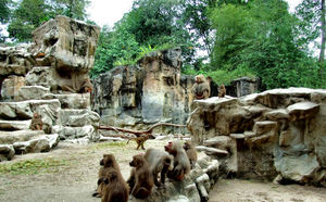 baboon activities9: a quietly active troop of baboons