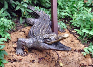 out of their enclosure18: replica zoo creatures for display and tactile experience - crocodile
