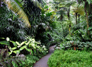 jungle walk2: well maintained paved narrow track through jungle foliage