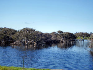 estuary wetlands2: internationally recognised Vasse-Wonnerup Estuary wetlands in Western Australia