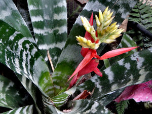 bromeliad background3: variety of bromeliad flowers and foliage