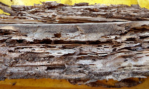 white-anted wood1: termite damaged garden timber