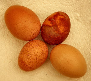 brown and speckled2: brown and speckled chicken eggs