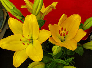 golden flower arrangement6: bunch of yellow oriental lily flowers and buds
