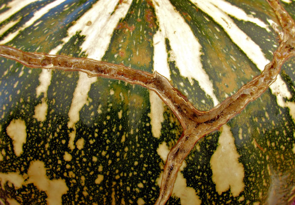 cracked: cracked mottled dimpled pumpkin surface