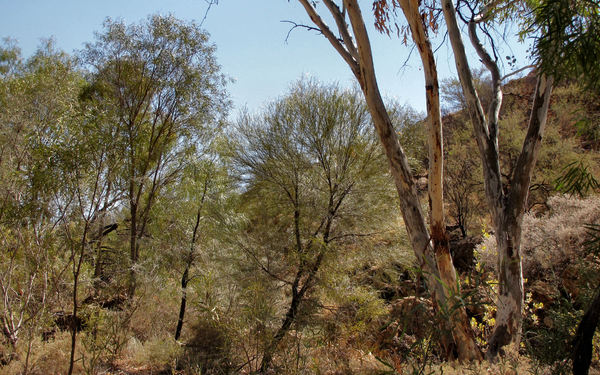outback hill1: outback bush environment in Central Australia