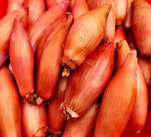Echalions2: onion-shallot cross gaining popularity in general and gourmet cooking