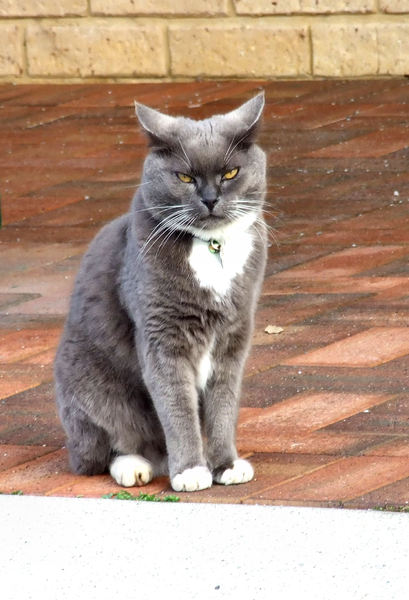 not a happy chappy: unhappy looking cat