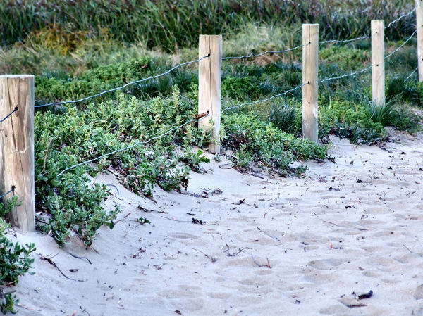 dune fence1: protective sand dune reclamation fence