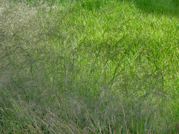 gone to seed1: field of grass varieties - some in seed