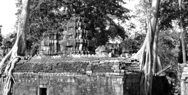 temple trees6: giant spung trees encroaching on Angkor temple ruins at Ta Prohm