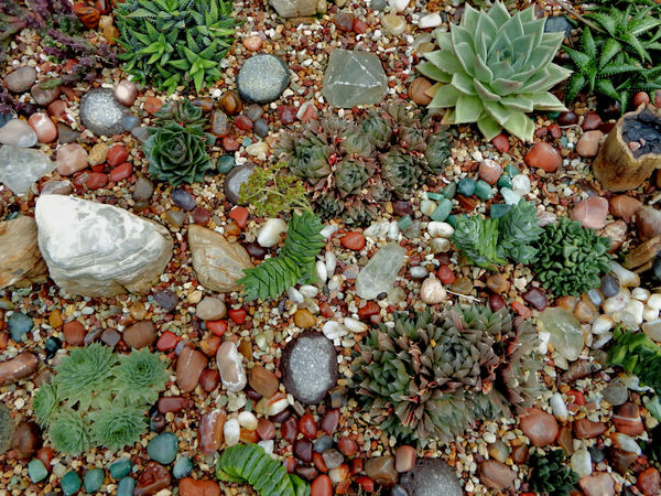 cacti & succulent gardens31: cacti and succulent varieties in specialised cactus garden