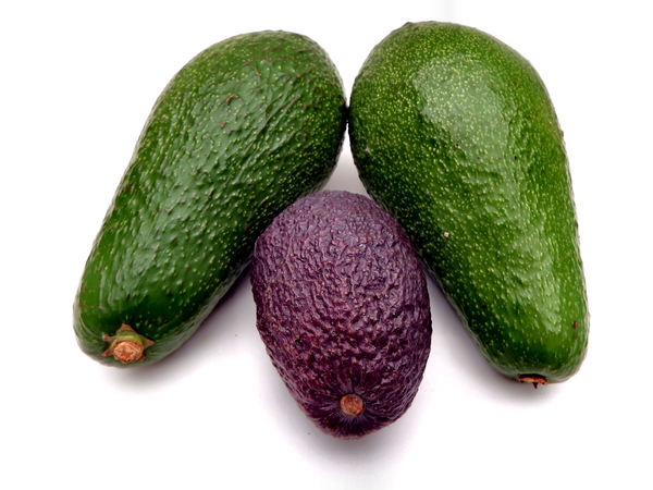 avocada varieties2: ripe avocados of varying shapes, sizes, colours & textures