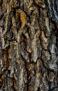 Tree Bark.: Tree Bark. Detailed.Texture effect.