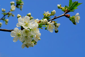 Spring: Blossoms in springtime