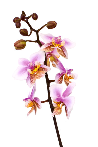 Orchids: Love flowers