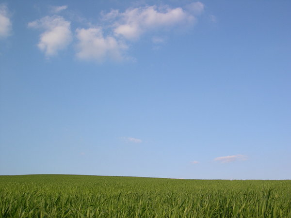 Fields of sky: sky and field