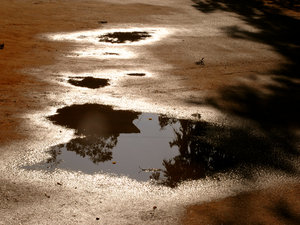 Puddles 1: Loved the way the edges of the puddles glitter in the sunlight