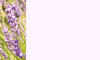 Nature Banner 6: A banner or card with a nature theme - lavender.