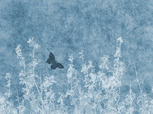 Blue Nature Grunge: A grungy meadow with butterfly textured background.  Lots of copyspace.