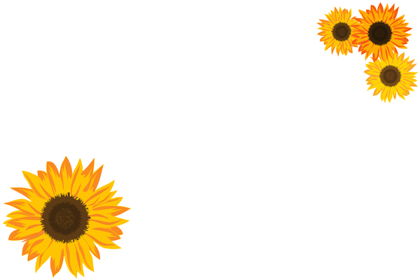 Sunflower Border 1: Basic sunflower border on white background.