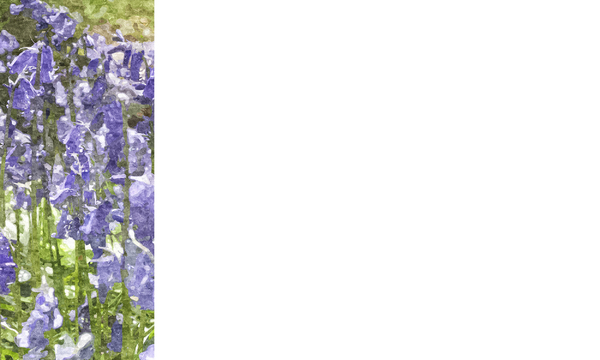 Nature Banner 2: A banner or card with a nature theme - bluebells