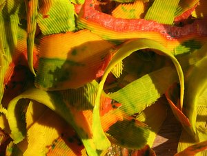 The Beauty in waste: Colourful explosion of sunlit shaves of pumpkin skin.