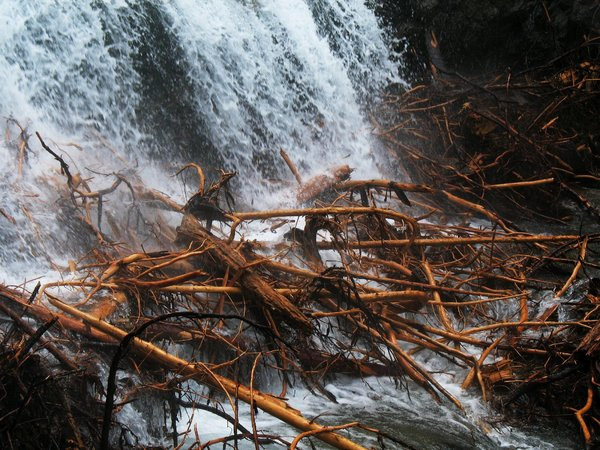 Patterns of decay...: Remainders of fallen Trees caught inside a waterfall-