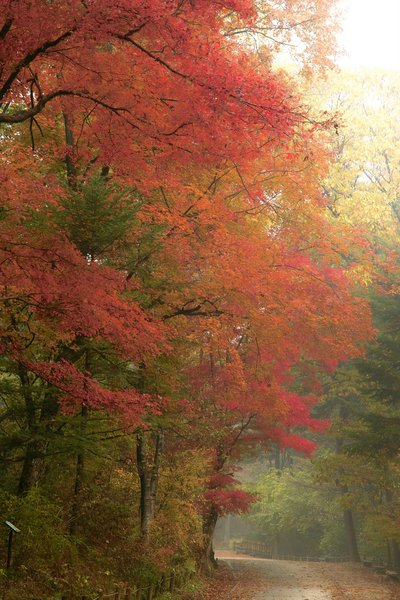 Herfst in Kwang reung National: