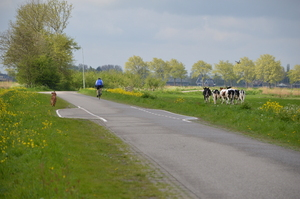 What can i say: This is the shot of that day for me. My dog, a biker and running cows...running together. And in the rigth corner, there is a duck flying.