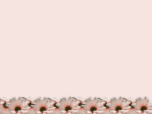 Floral Border 21: Floral border on blank page. Lots of copyspace.