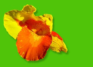 Canna - Colours of Summer 2:
