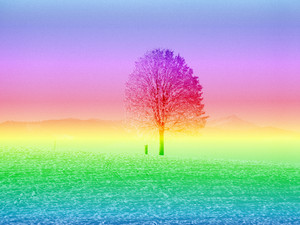 Rainbow Tree: A public domain image given a rainbow and texture effect. My resulting image is copyrighted to me. You may prefer:  http://www.rgbstock.com/photo/n6d0kvA/Grungy+Fantasy+Sunset  or:  http://www.rgbstock.com/photo/ofHONqM/Collage+Fantasy+Tree+1