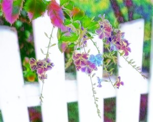 White Fence and Flowers 3: Colourful flowers on a white fence make a lovely image. You may prefer:  http://www.rgbstock.com/photo/2dyVs9x/Allamanda+-+Spring+Blooms  or:  http://www.rgbstock.com/photo/ojtbsVs/Tiny+Purple+Flowers