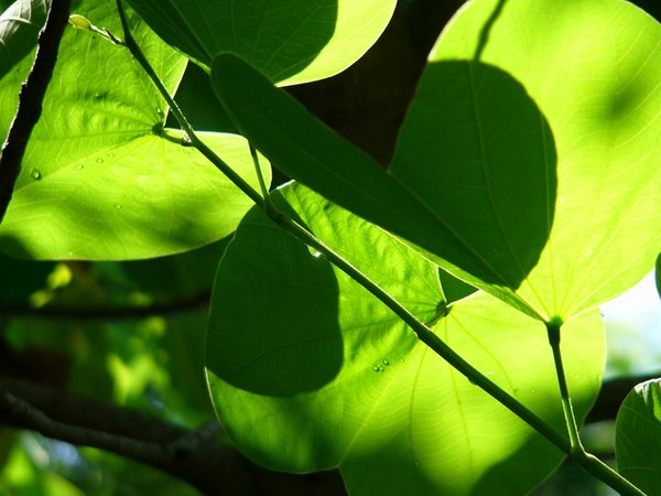 Light and Shadows: The inviting light, shade and colours of fresh, rain-washed foliage.