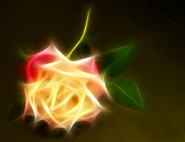 Abstract Rose 4: A pretty, fractalised rose.