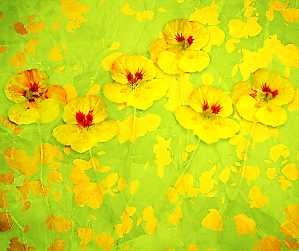 Nasturtium Abstract 4: An abstract, arty image of nasturtiums in yellow shades.
