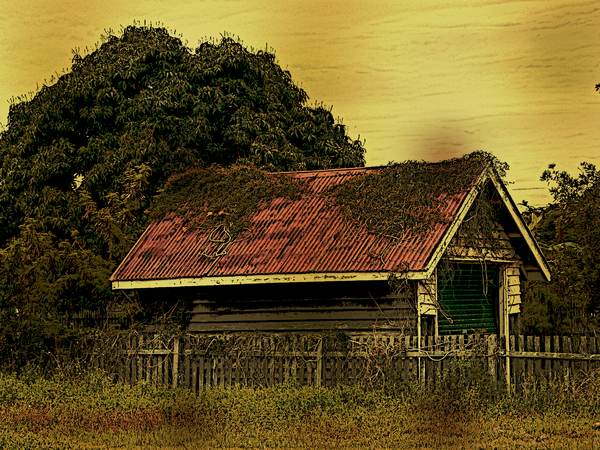Abandoned Shed: An overgrown, abandoned shed with a red roof. Photo with several filtersto give it an old vintage look. Looks a bit sketched or arty in the large version.