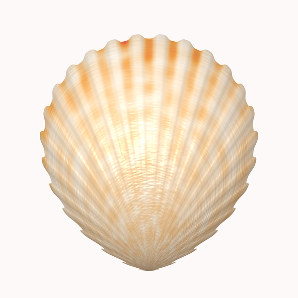 Shell 1: A scalloped seashell isolated on a white background. high resolution. Please use according to the image licence. You may prefer this:   http://www.rgbstock.com/photo/ns72hGw/Ammonite  or this:  http://www.rgbstock.com/photo/ns727uK/Ammonite+2
