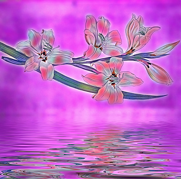 Flower Illustration: Flowers over water made from a public domain image. You may prefer:  http://www.rgbstock.com/photo/mf1c7rC/Purple+Flower+Over+Water  or:  http://www.rgbstock.com/photo/nN28s3g/Flower+Over+Water