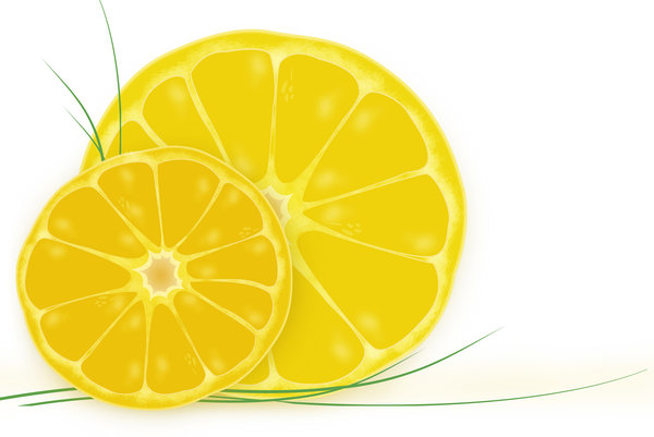 Sunny fruit: citrus illustration
